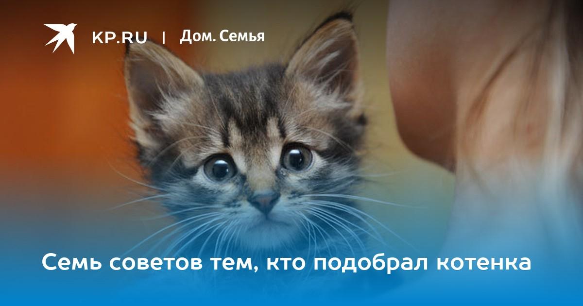 игра веселый кот где надежнее хранить деньги