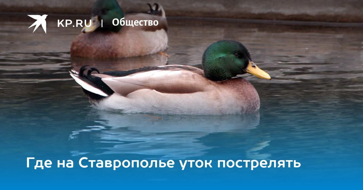 В Татарстане официально разрешили охотиться на гусей и уток