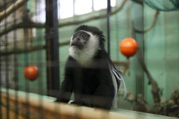Из-за кризиса обезьяны в зоопарке Калининграда останутся без манго и авокадо