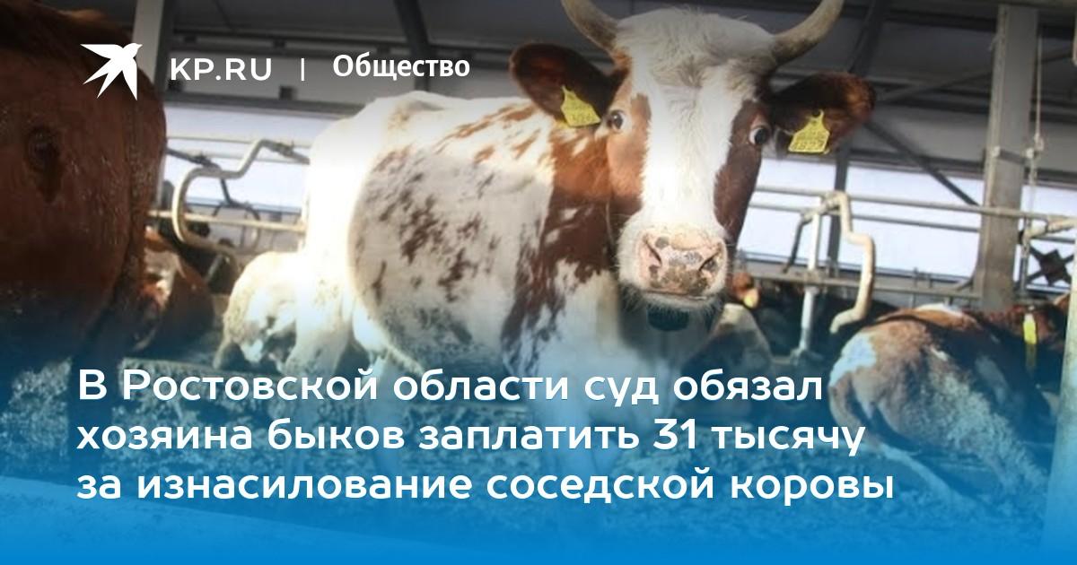 быки и коровы решение онлайн