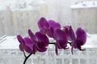 Красивый февральский снегопад в Волгограде