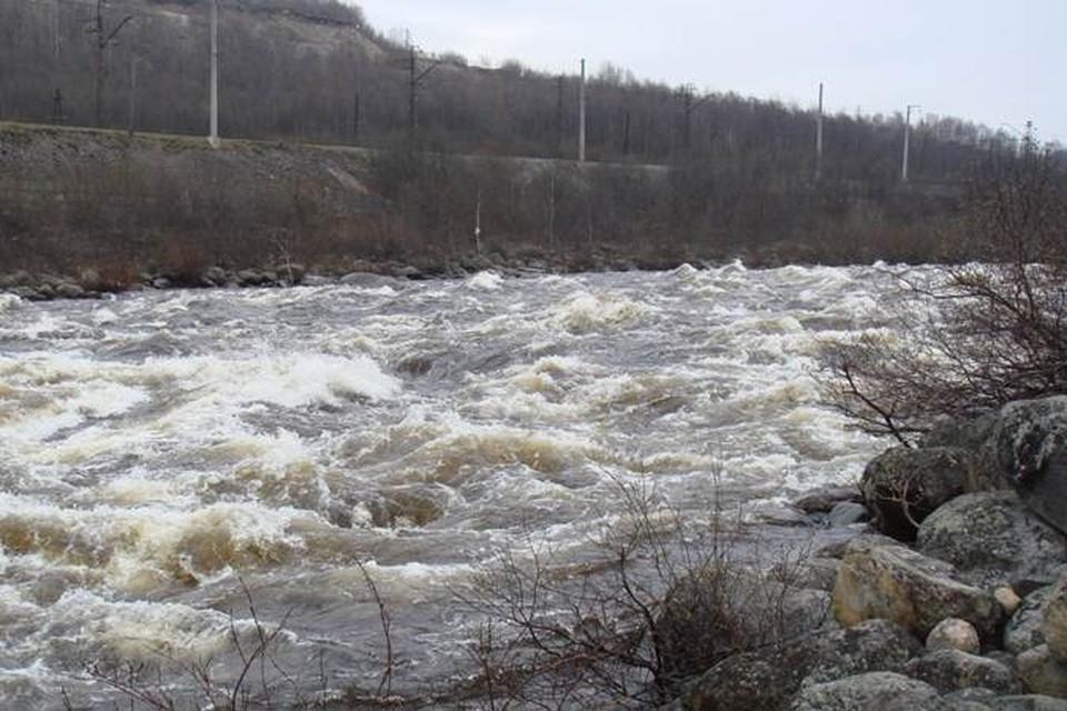 Ученые опасаются, что вспышка сапролегниоза в реке Кола уничтожит всю  популяцию здешнего лосося. Фото: www.rsn.ru