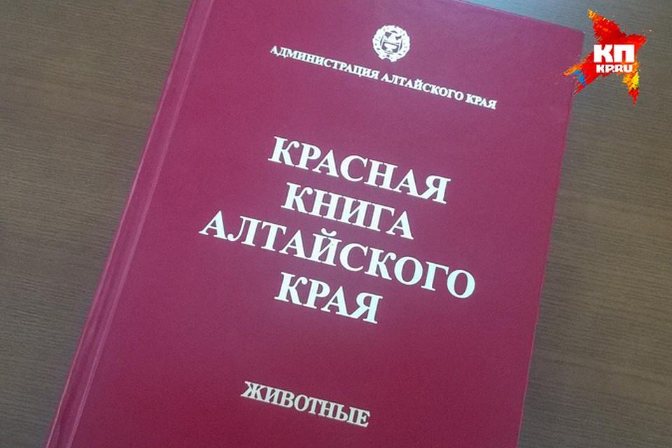 Доклад о животных алтайского края из красной книги 2495