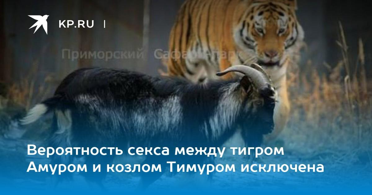 Смотреть секс с тигром