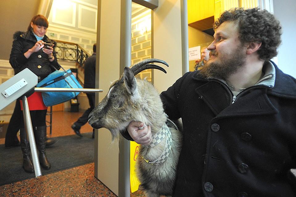 Самая известная коза Подмосковья побывала в стенах Министерства сельского хозяйства региона.
