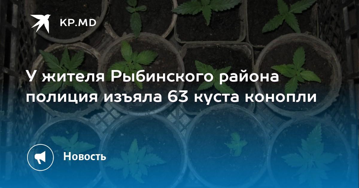 Конопля Качественный Северск купить спайса в омске