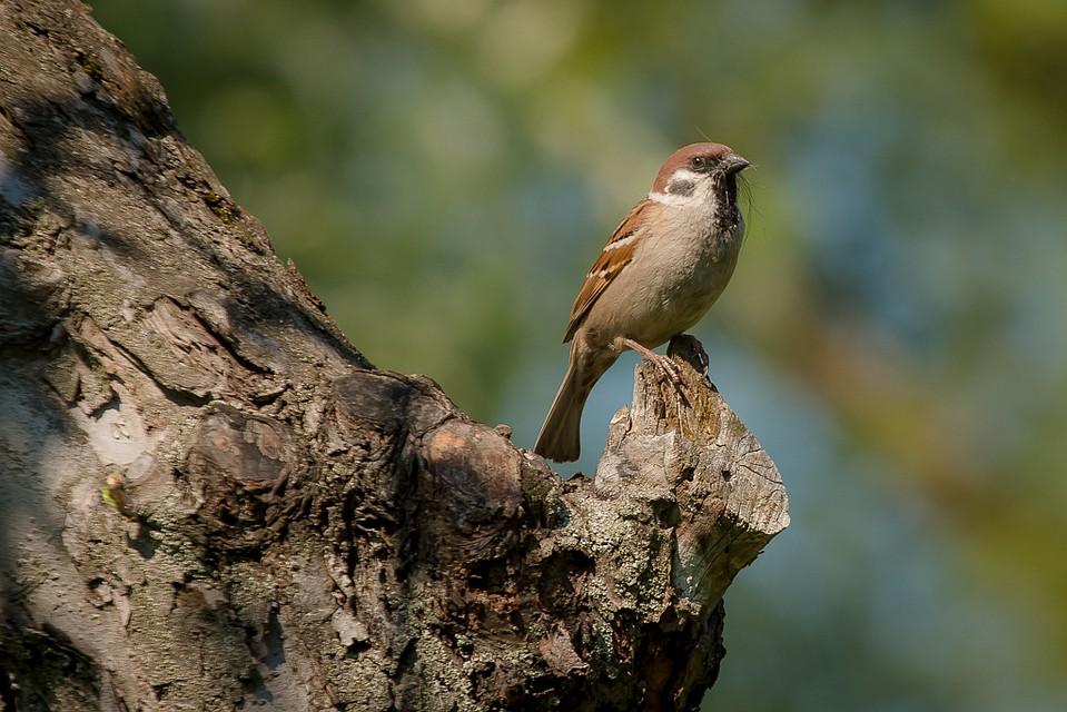 зелени, птицы воронежской области фото с названиями тому же