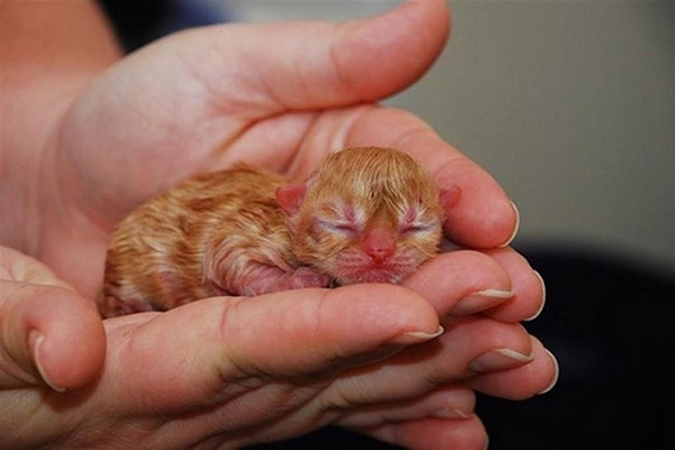 влияет картинки маленьких котят которые только родились фантастических