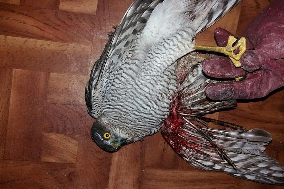 державина помнят птица сломала крыло картинки только
