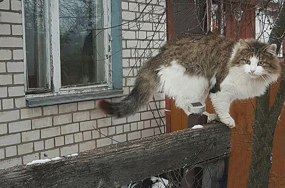 Взорванный петардой кот