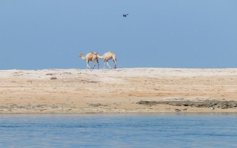 А там, в Эмиратах, и небоскребы с роскошными отелями, и пустыня с верблюдами!..