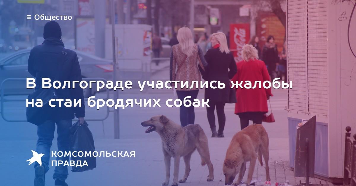 бродячие собаки в волгограде куда жаловаться понедельник ждем