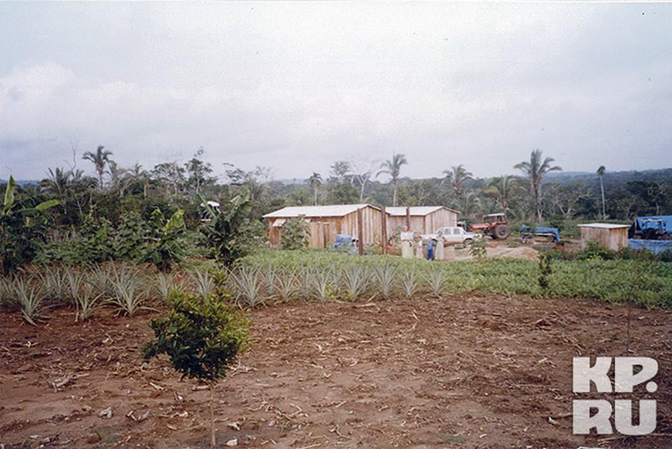В Латинской Америке старовером приходилось корчевать джунгли под пашню
