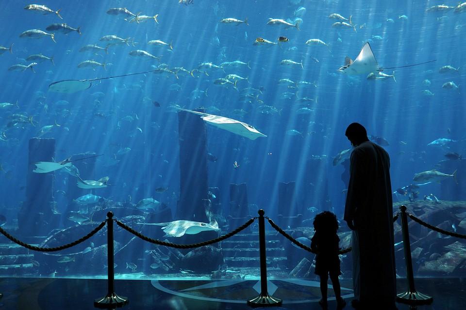 В Дубаи после карантина вновь открылся океанариум