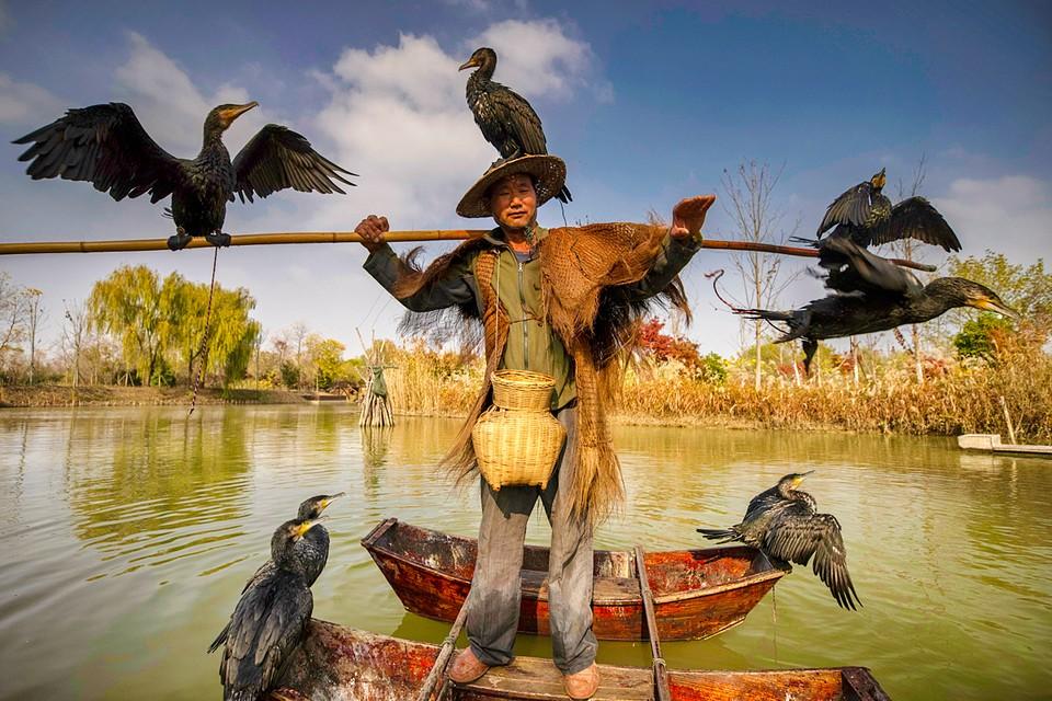 Птицы облепили рыбака в ожидании улова. Снимок сделан на озере Хунцзэху в провинции Цзянсу на востоке Китая
