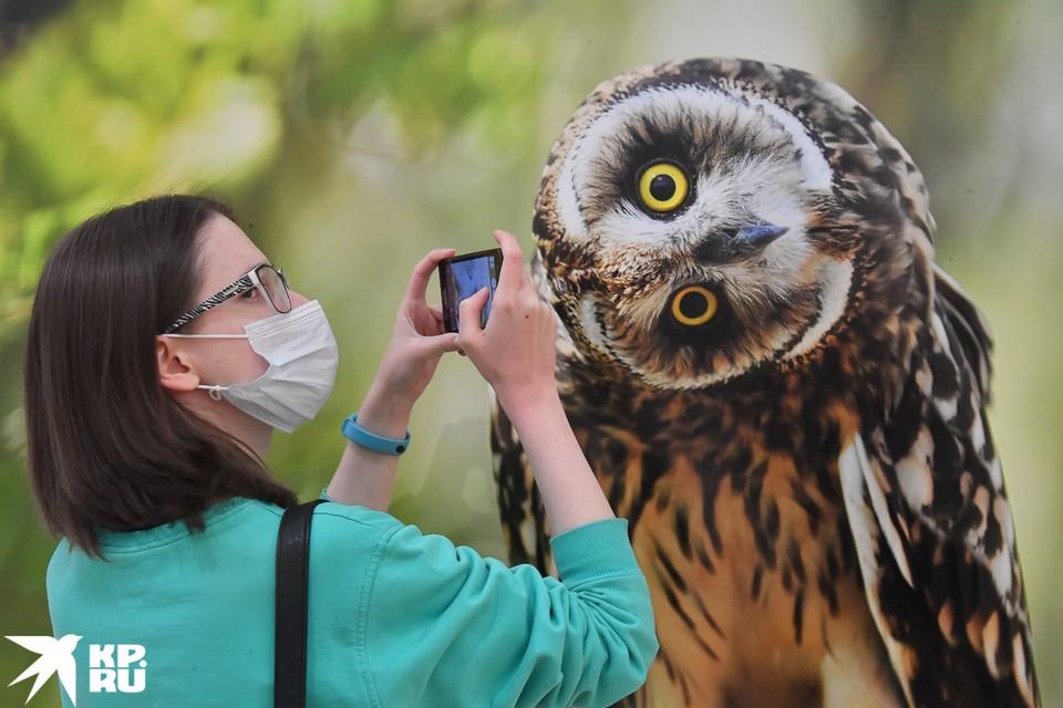 Фестиваль предоставит возможность лучше познакомиться с животными, обитающими во всех регионах страны