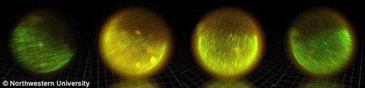 Яйцеклетка испускает излучение волнами.