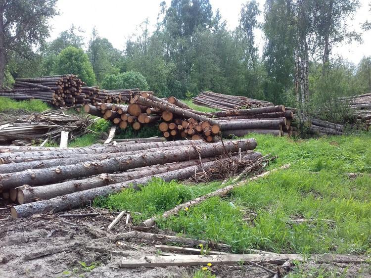 Вырубки в Некоузском районе.