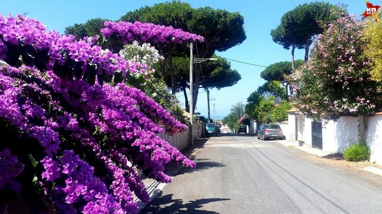 Такое чувство, что бугенвиллия любимый кустарник итальянцев. Они здесь на каждом шагу.