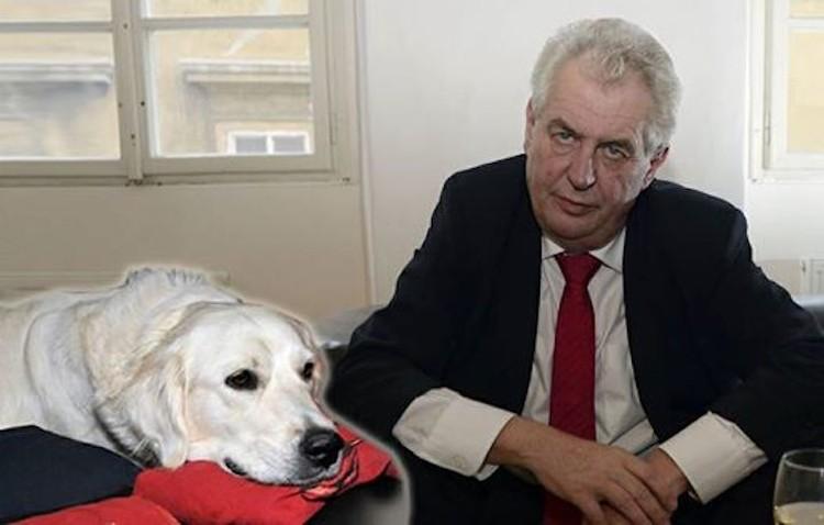 Милош Земан с ретривером Дарси. Фото: Канцелярия Президента Чехии.