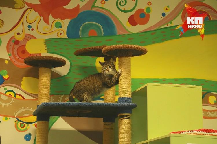У молодых игривых кошек часто активная жизнь наступает ночью.