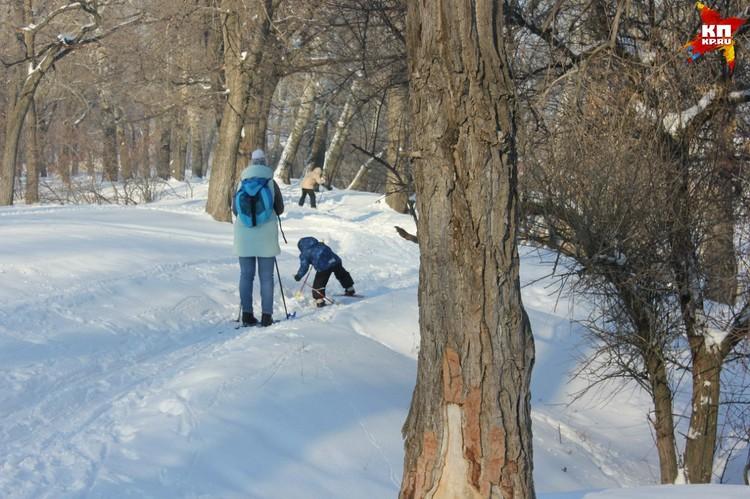 Лес на Сазанке - любимое место энгельсских лыжников.