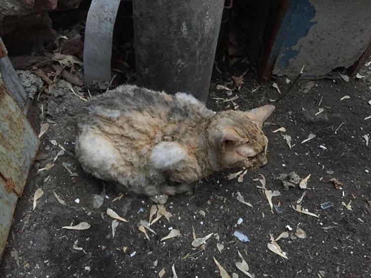 Кошка пролетела 10 этажей и осталась жива Фото: соцсети