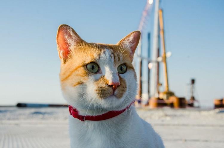 К лету рыжий всегда сбрасывает вес. Фото: кот Моста/Facebook