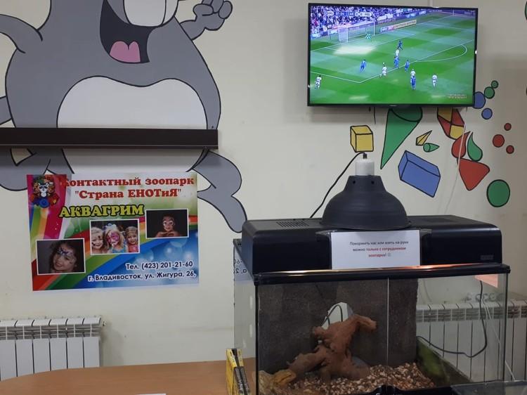 Аквариум с ящерицами стоит рядом с телевизором