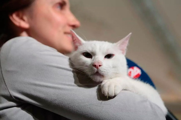 После мундиаля Ахилл заживет по-кошачьи: переедет в обычную семью.