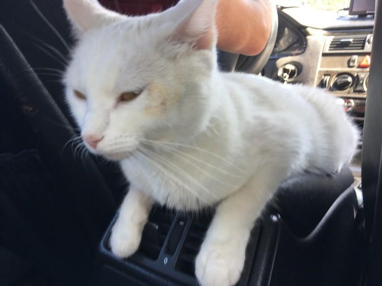 Домой пинчанка забрала больную и похудевшую кошку - в гостинице питомица подхватила инфекцию.
