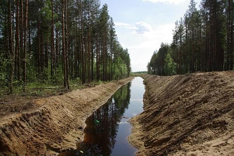 Примерно так выглядели канавы, среди которых заблудился Сергей Юрьевич. Фото: союз охраны птиц россии (www.forest.ru)