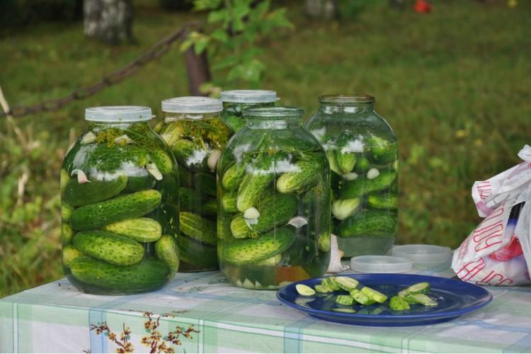 В Истобенске соленые огурцы готовят по старинным рецептам. Фото: Ольга БЫТОТОВА