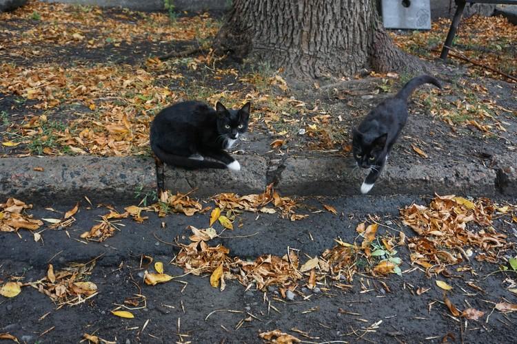 Животные на передовой всегда общительны и тянутся к человеку.