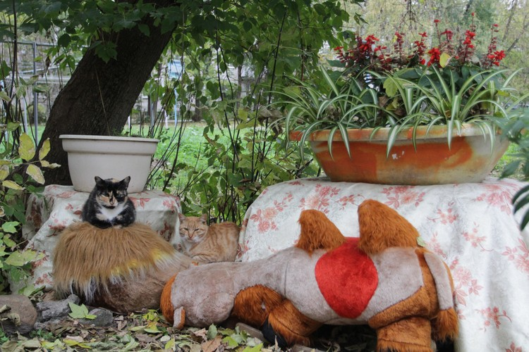 Котикам нет дела до людских разборок