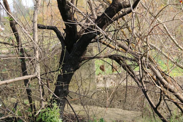 У входа в подземелье - обожженное дерево