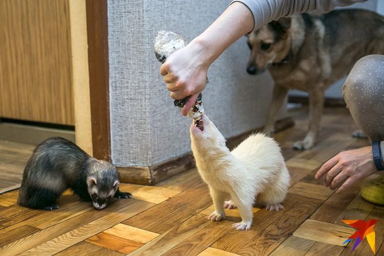 Вкуснотища! Собака Марта интересуется: а ее когда будут угощать?
