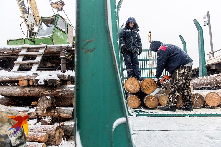 Китайцы сами уже давно лес не рубят