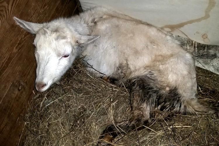 Некоторые животные были беременны. Фото: псковская волонтерская организация «Зоозащита».