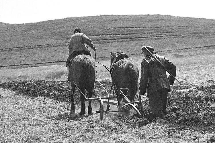 1918 г. Пахота на полях коммуны. Фотохроника ТАСС