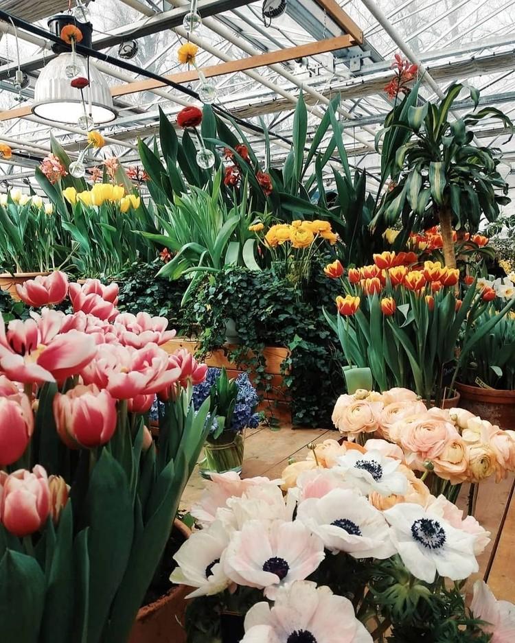 В «Аптекарском огороде» начала работу выставка «Репетиция весны». Фото пресс-службы