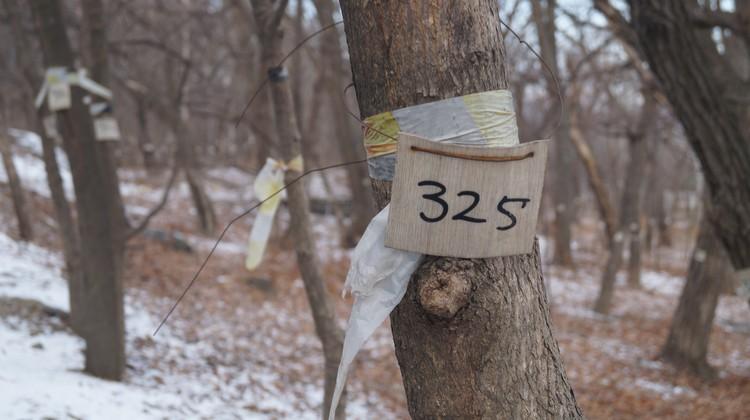 Вероятно, скоро от лесного массива на Академгородке не останется даже пеньков