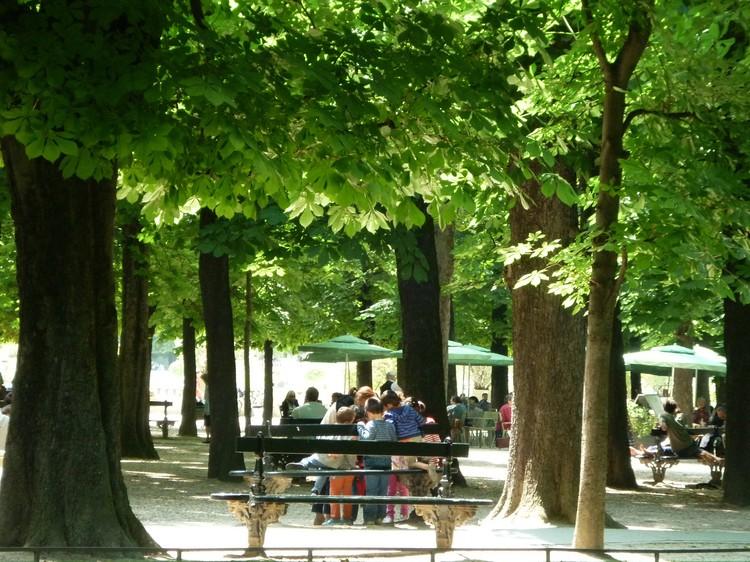 Каштаны в Рязани и Париже отличает одна особенность: во Франции их не белят.