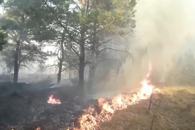 Двое мужчин боролись с лесным пожаром при помощи лапника и лопаты. ФОТО: кадр видео Романа Жатова.