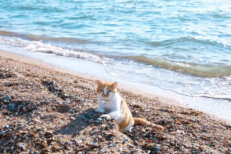 Кот не боится промочить лапы и хвост. Фото: кот Моста/VK