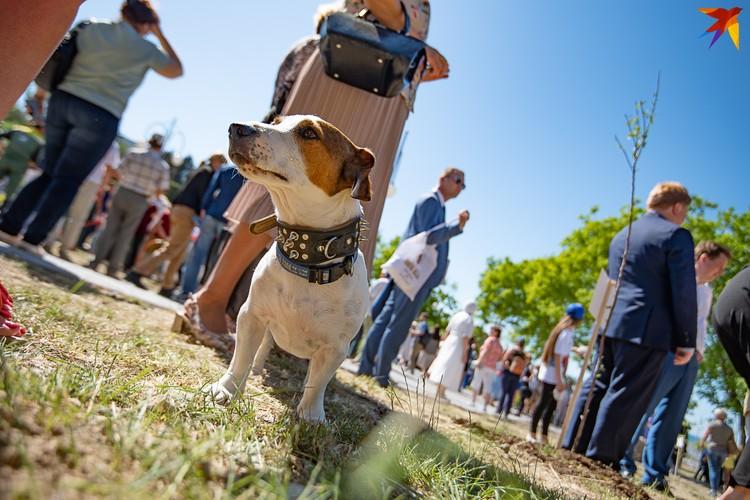 Севастопольские собаки весьма любопытны и жаждут славы