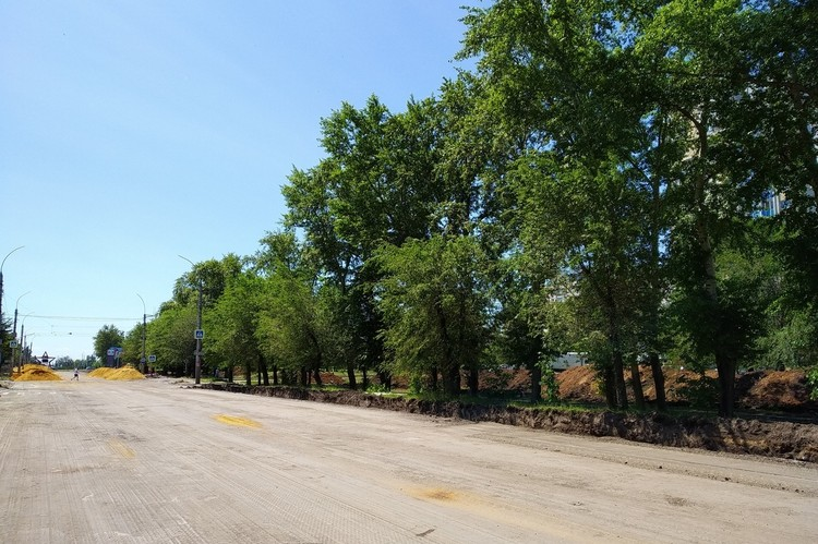 В Липецке на проспекте Победы спилят 170 деревьев