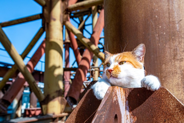 Кот прекрасно вписывается в рабочую обстановку. Фото: Кот Моста/VK