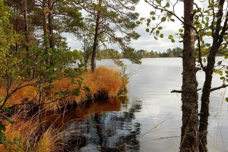 Фото: rdeysky.org. Природа Рдейского заповедника готовит множество сюрпризов туристам.