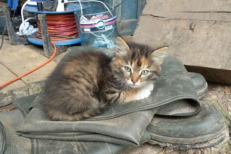 Малышка Ийка, выжившая при наводнении в Тулуне, теперь будет жить в тепле и заботе